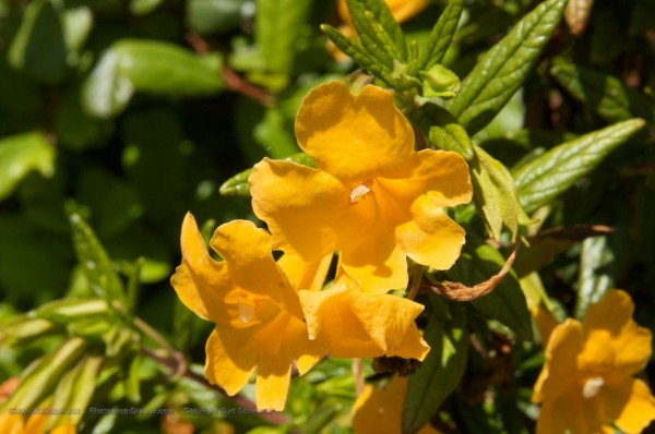orange/yellow flowers