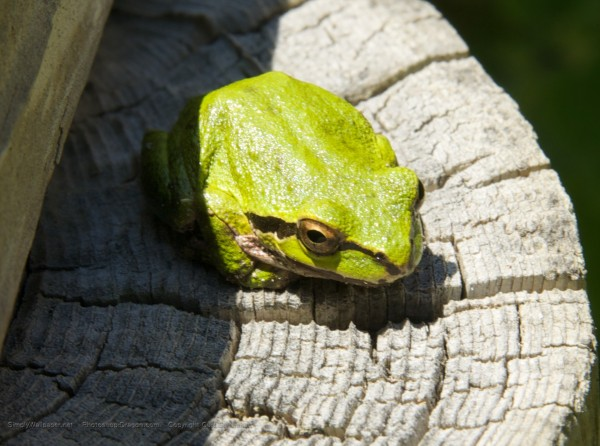 small green frog sitting on a post