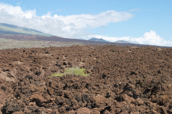 lava field, lots of scattered lava rocks
