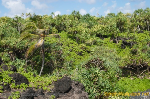 tropical vegetation and landscape