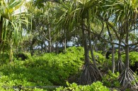 tropical island vegetation
