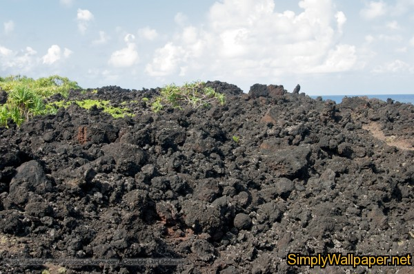 plants grow amid a rough field of lava rocks on Hawaii