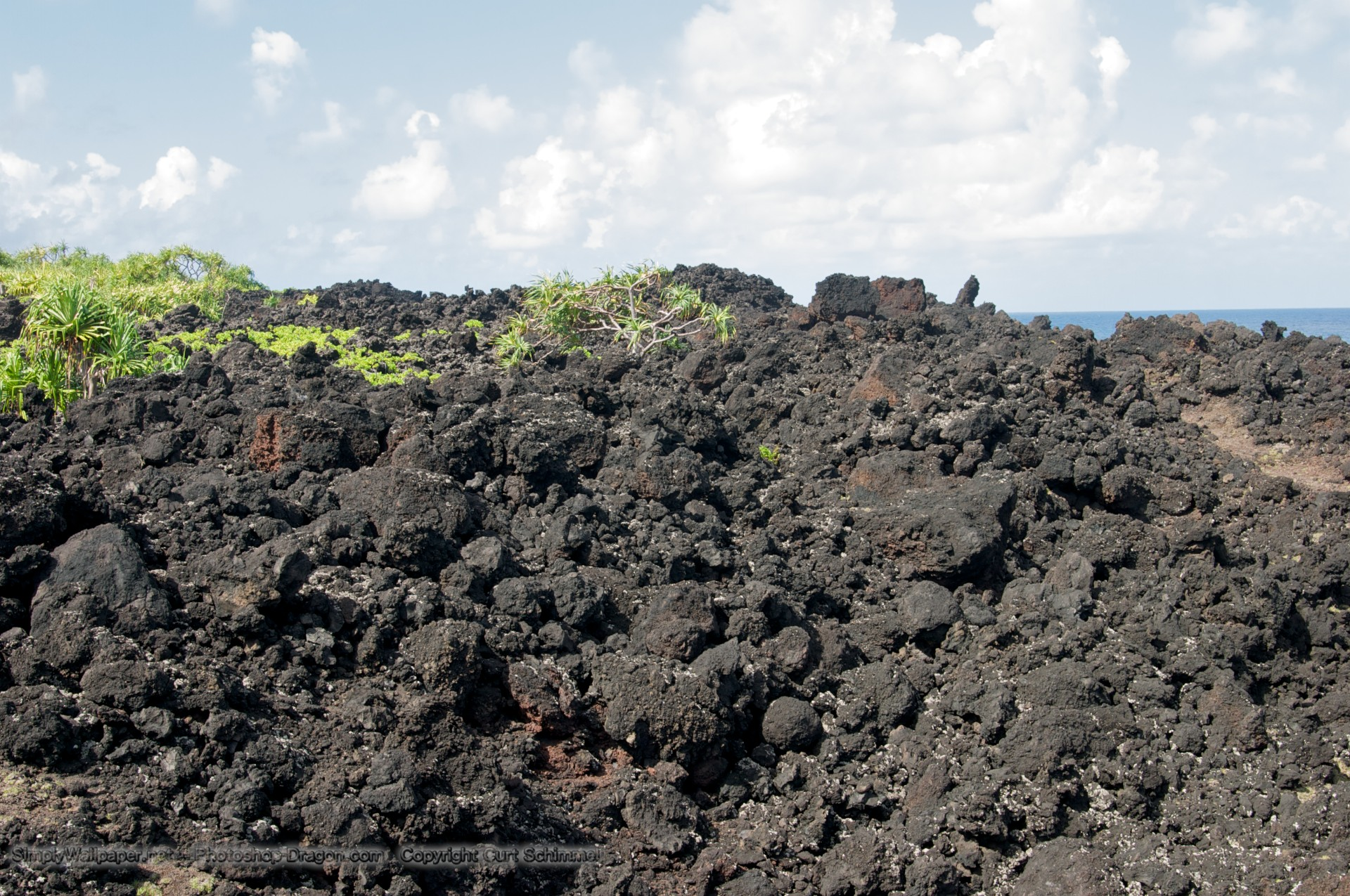 Lava Rock Plants Plants Amid The Lava Field at