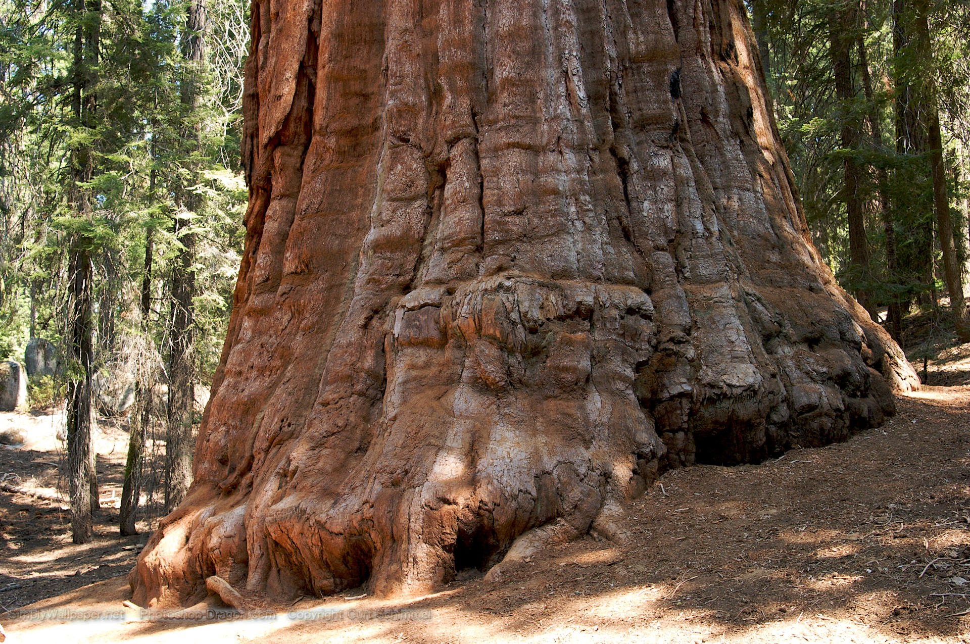 sequoia national park buddhist dating site These locations online with the beautiful johannesburg dating online national parks  newberry mountain national park to sequoia national park rv park web site.