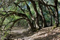 trees bending over a hiking trail