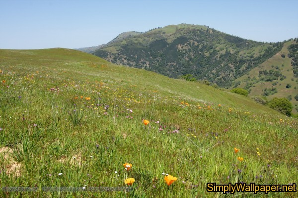 meadow of wildflowers with hills in the background