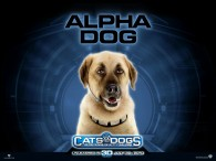 wallpaper picture of Butch the dog from the movie Cats and Dogs Revenge of Kitty Galore