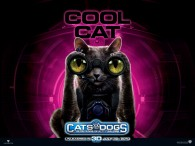 wallpaper picture of Catherine the cat from the movie Cats and Dogs Revenge of Kitty Galore