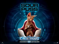 wallpaper picture of Kitty Galore the cat from the movie Cats and Dogs Revenge of Kitty Galore