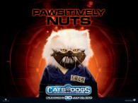 wallpaper picture of Mr. Tinkles the cat from the movie Cats and Dogs Revenge of Kitty Galore