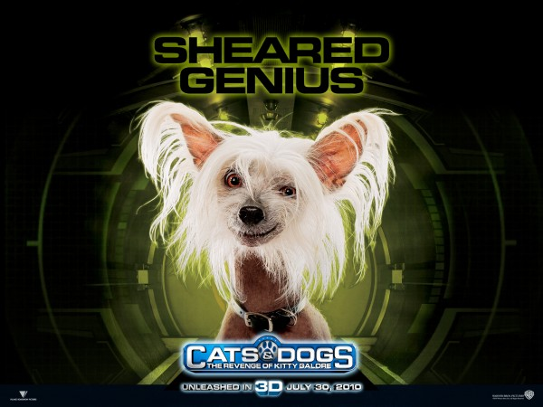 wallpaper picture of Peek the dog from the movie Cats and Dogs Revenge of Kitty Galore