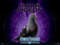 wallpaper picture of Seamus the pigeon from the movie Cats and Dogs Revenge of Kitty Galore