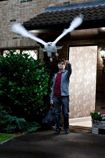 harry potter and owl from deathly hallows