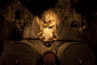 mounted hog's head on the wall over barrels of butter beer