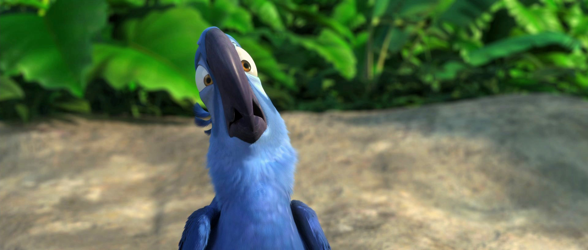 Blu the Macaw from the movie Rio wallpaper - Click picture for high