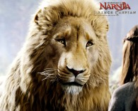 Aslan the lion from the Chronicles of Narnia wallpaper