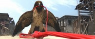 a hawk from the CG animated movie Rango wallpaper