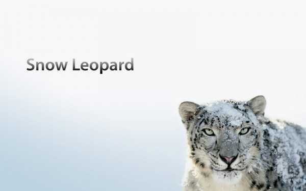 the snow leopard that appears on the Mac OS X box wallpaper