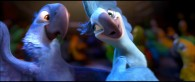 two macaws, Blu and Jewel, dancing from the animated movie Rio wallpaper picture